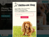 differentdog.com coupons